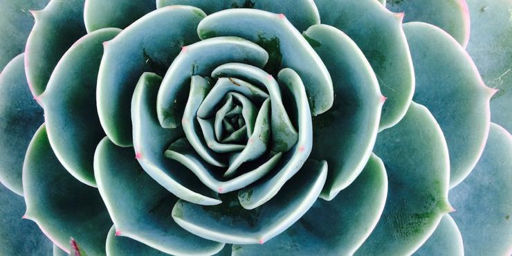 Somatic Fractal Succulent Organic Intelligence Blog