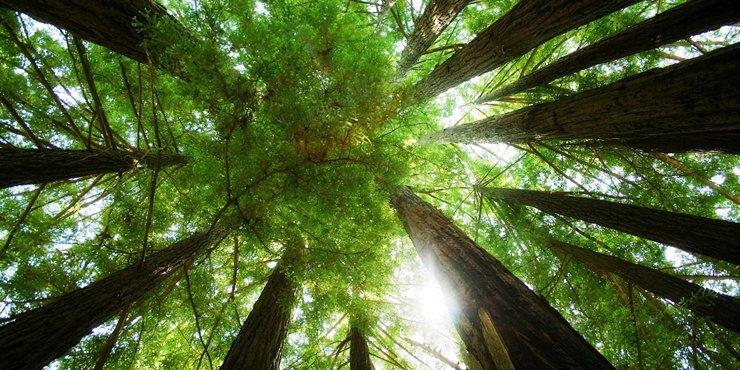 OI Blog Organic Intelligence Spiritual Sean Feit Redwoods
