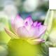 Trauma and Spiritual Practice